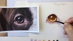 how to paint a dog s brown eye