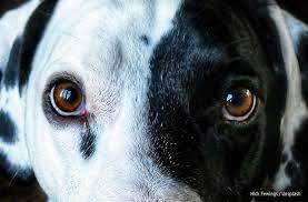 what colors do dogs see the bark