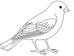 Pictures To Color Birds Bird Pictures To Color Innovative Bird