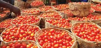 Image result for basket of tomatoes
