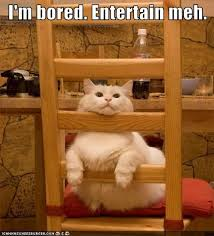 I'm bored entertain me | Funny Dirty Adult Jokes, Memes & Pictures via Relatably.com