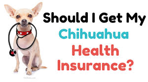 Does the policy cover hereditary and congenital conditions? Should I Get My Chihuahua Health Insurance Chi Pets