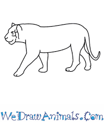 tiger drawing pictures. Wonderful Drawing In Tiger Drawing Pictures R