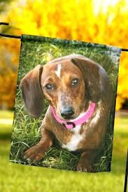 dachshund garden flag with adorable photo by personalized holiday flags decorative garden flag dachshund
