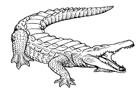 Small Picture alligator coloring pages Just Colorings