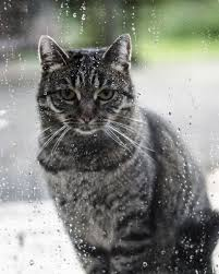 best cat on rainy day images rainy days  watchfull cat by megan collins on 500px