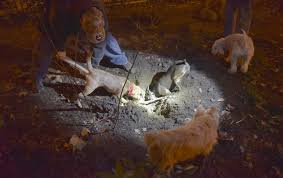 jimmy hoffman helps rat hunting dogs get to their hoped for prey that hole came up empty but another one proved more productive