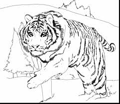 surprising tiger coloring pages printable with tiger coloring ...