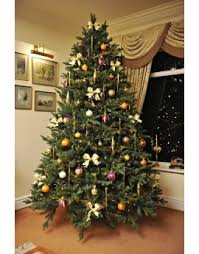 Un-Lit Christmas Tress - Christmas Tree World