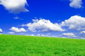 green grass blue sky. Perfect Green Vinyl 3Wx3Hm Nice Durable Photography Background Promotion Green And Grass Blue Sky N