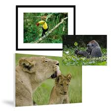 Animal Prints Animal Prints Posters On National Geographic Art Store
