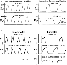 Types Of Breathing Patterns Frontiers Control Of Breathing By Interacting Pontine And
