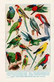 Parrot Poster Parrot Pet Birds Bird Types