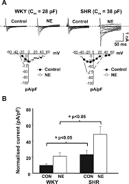 mv 443 form remodeling of the cardiac pacemaker l type calcium current and its