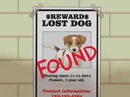 Pet Poster Elegant Of Found Dog Flyer Template Fieldstation Co Flyer 12