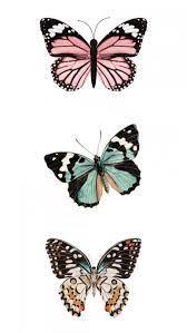 Butterfly art, Butterfly wallpaper ...