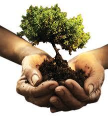 نتیجه تصویری برای هر ایرانی یک درخت