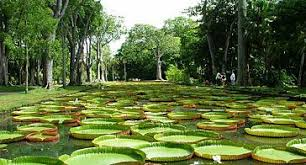 Image result for image of MAURITIUS tourism place