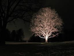 outdoor tree lighting ideas. Delectable Outdoor Tree Lights Ideas Creative Design Lighting G