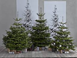 We found 70++ Images in Where To Buy Real Christmas Trees Gallery: