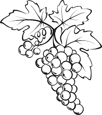 Small Picture Free Printable Bunch of Grapes Coloring Page