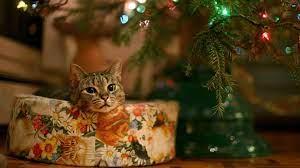 New Christmas Kitten Desktop Backgrounds