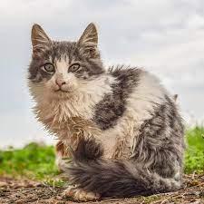 野良猫 捕まえ 方