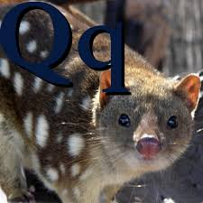 File:Q is for Quoll.jpg