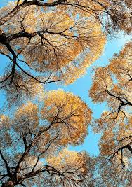 <b>Фотограф Петр Фисун</b>. | Natură | Abstract, Nature, Tree of life
