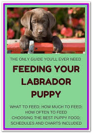 Wellness Core Puppy Feeding Chart Best Dog Food For Chocolate Lab Puppies At A Glance Our