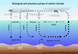 ocean acidification trying to get the science right watts up  preview in this essay i will discuss the efforts of various scientific bodies and individual scientists to regularize to bring into line correct