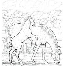 Detailed Horse Coloring Pages Horse Coloring Pages For Adults Free