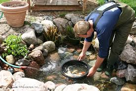 how to clean a koi pond. Interesting Koi Cleanout  Aquascape For How To Clean A Koi Pond Aquascape Inc