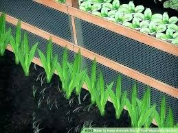 how to keep chipmunks out of garden. Plain How Keep Chipmunks Out Of Garden Keeping Animals  Prissy Ruining With How To C