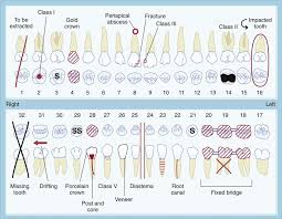 Manual Charting In Dentistry 12 The Dental Examination Pocket Dentistry