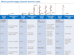 Winter Wheat Growth Stages Chart Wheat Growth And Development Yara Uk