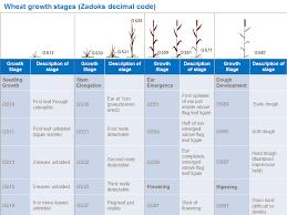 Wheat Growth Chart Wheat Growth And Development Yara Uk