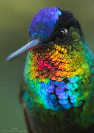 Image result for photo colibri