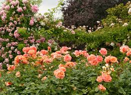 Longwood is one of the great gardens of the world, inspiring people through horticulture and the arts. Happy Belated Valentine S Day The Good Garden