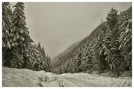 snow falling on cedars essaysnow falling on cedars essay   get help from professional term paper