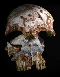 carbon dating oldest human remains
