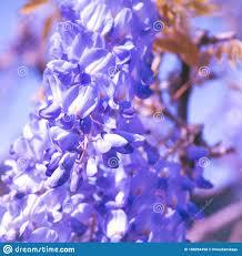 Nature Aesthetics Wallpaper. Blooming ...