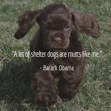 Dog Quotes We Rounded Up The Best Of The Best