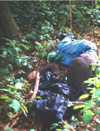 original position the dead was found with a leather jacket over his head note