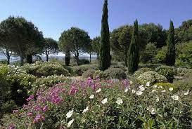 evergreen shrubs for coastal areas
