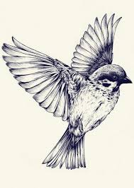 flying bird drawing.  Bird Teagan White Bird Illustration Ink Illustrations Drawings Flying  Drawing For Drawing