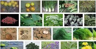 نتيجة بحث الصور عن صور اعشاب
