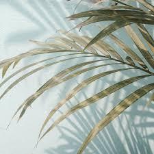 palm trees tumblr. Tags // Pale, Pastel, Blue, Tumblr, Plants, Love, Sky, Palm Tree Acc | @kittyrxse Trees Tumblr