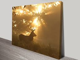 stag in the morning sunlight wildlife photography canvas wall art on wall art prints australia with canvas art prints perth wall canvas picture printing australia