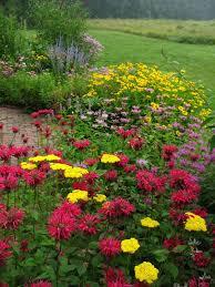 Small Picture Best 25 Hummingbird flowers ideas on Pinterest Butterfly plants